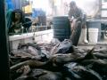 Nelson-bay-Fishing-040