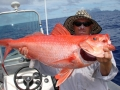 flame snapper (3)